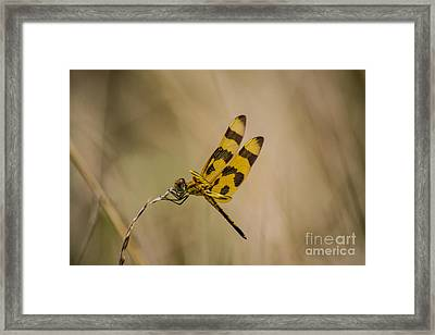 Halloween Pennant Dragonfly Framed Print