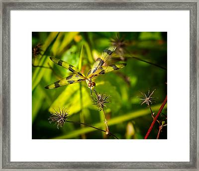 Halloween Pennant Dragonfly Framed Print by Mark Andrew Thomas