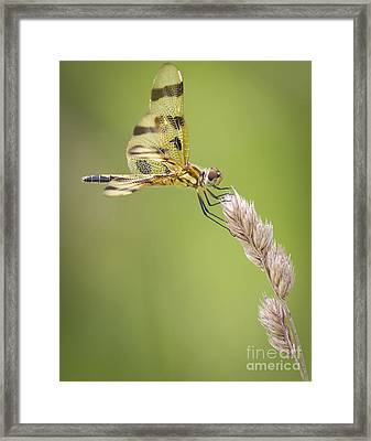 Halloween Pennant Framed Print by Ricky L Jones