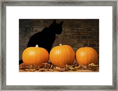 Halloween Pumpkins And The Witches Cat Framed Print by Amanda Elwell