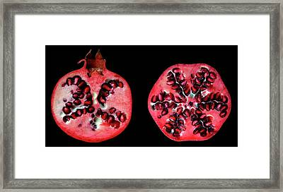 Halved Pomegranates Framed Print by Thomas Fester