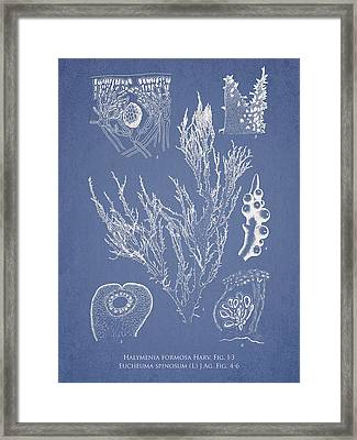 Halymenia Formosa And Eucheuma Spinosum Framed Print by Aged Pixel