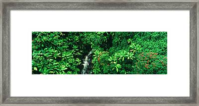 Hamakua Coast, Hawaii, Hawaii, Usa Framed Print