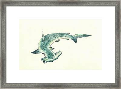 Hammerhead Shark Framed Print by Michael Vigliotti