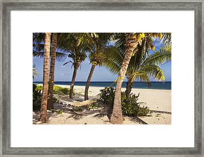 Hammock And Palm Trees  Framed Print