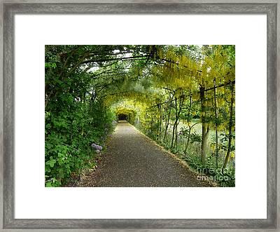 Hampton Court Palace Flower Tunnel Framed Print by Deborah Smolinske