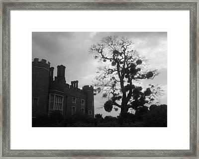 Hampton Court Tree Framed Print
