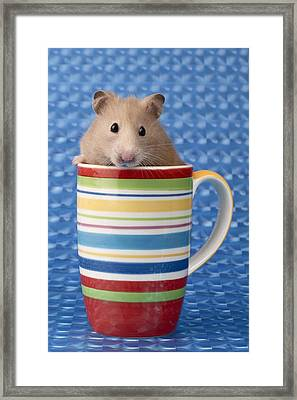 Hamster In Cup Framed Print by Greg Cuddiford