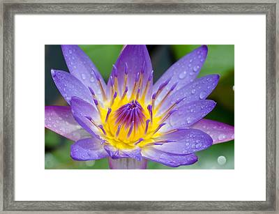 Framed Print featuring the photograph Hana Water Lily by Hawaii  Fine Art Photography