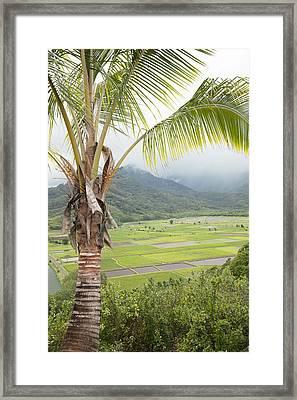 Hanalei Taro Field Framed Print by Jenna Szerlag
