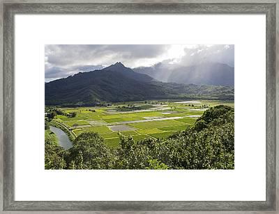 Hanalei Taro Fields Framed Print by Saya Studios
