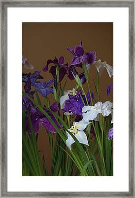 Hanashoubu Framed Print by Rachel Mirror