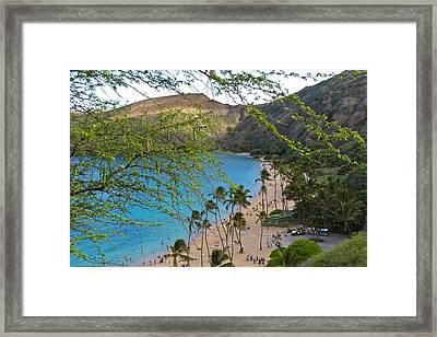 Hanauma Bay Nature Preserve Beach Through Monkeypod Tree Framed Print
