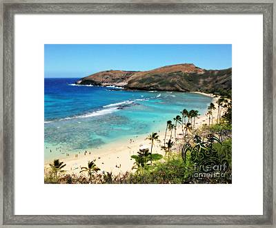 Framed Print featuring the photograph Hanauma Bay With Turtle by Mindy Bench
