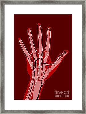 Hand Anatomy, Illustration Framed Print by Claudia Stocker