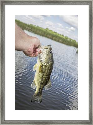Hand Holding Largemouth Bass Framed Print by Thomas Young