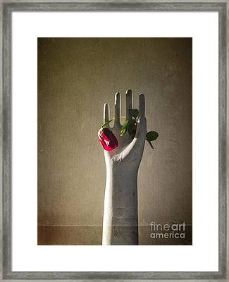Hand Holding Rose Framed Print by Terry Rowe