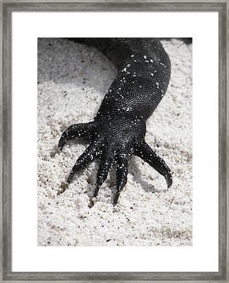 Hand Of A Marine Iguana Framed Print
