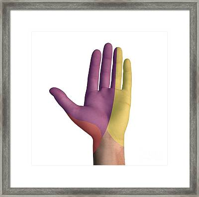 Hand Palmar Nerve Regions, Artwork Framed Print by D & L Graphics