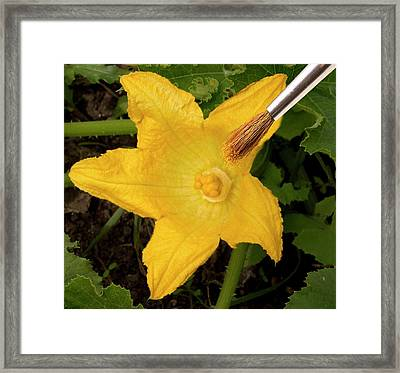 Hand Pollination Framed Print by Sheila Terry