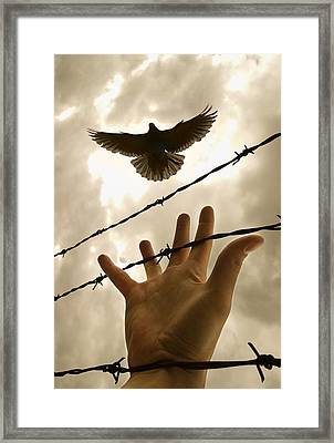 Hand Reaching Out For Bird Framed Print