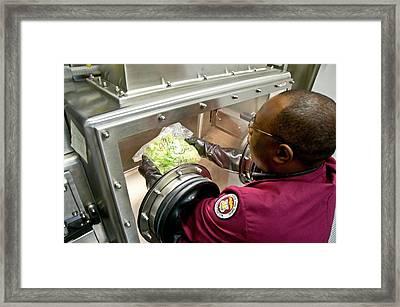 Handling Food Sample Framed Print by Food & Drug Administration