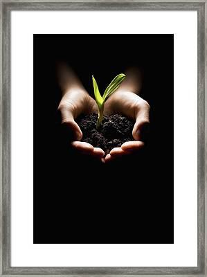 Hands Holding A Seedling Framed Print