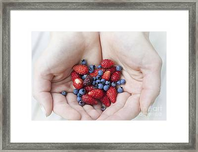 Hands Holding Berries Framed Print by Elena Elisseeva