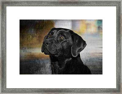 Handsome Black Lab Framed Print