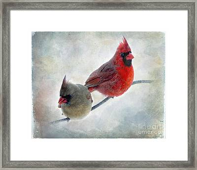 Handsome Couple IIi Framed Print by Debbie Portwood