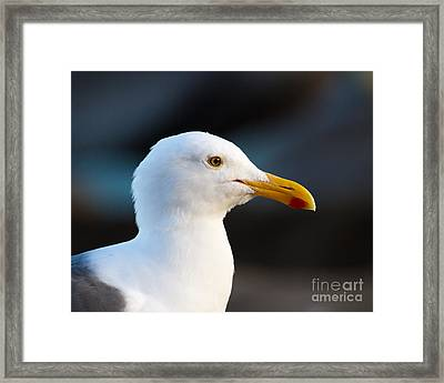 Framed Print featuring the photograph Handsome Gull by Dale Nelson