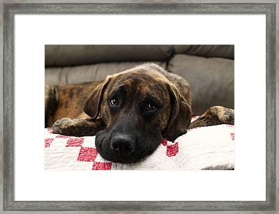Handsome Hank   Framed Print by Peggy Franz
