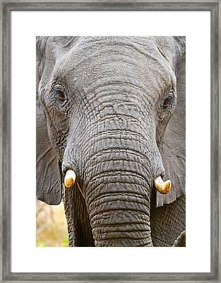 Handsome Framed Print
