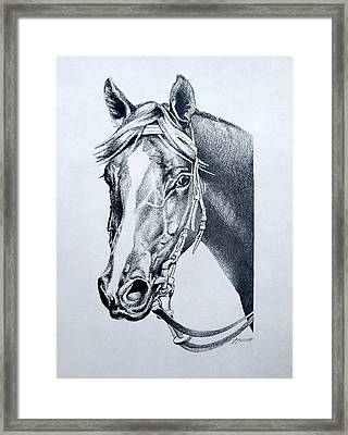 Handsome Framed Print by Patricia Howitt