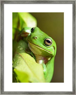 Hang In There Frog Framed Print