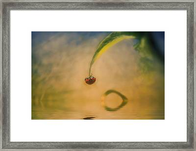 Hang In There Framed Print by Diane Dugas
