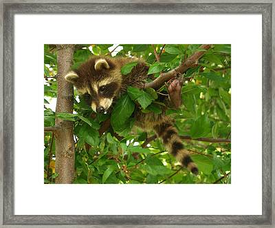 Hang In There Framed Print by James Peterson