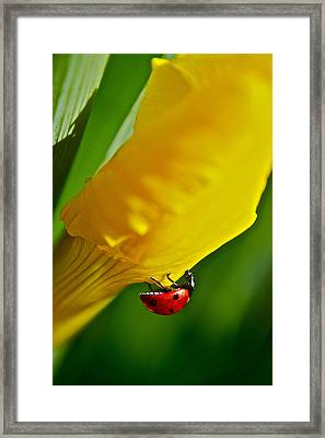 Hang On Framed Print by Bill Owen
