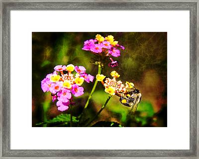 Hang On Framed Print by Mark Andrew Thomas