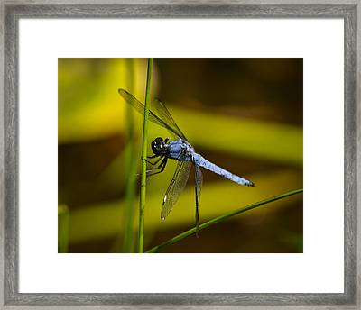 Hang On Framed Print by Mary Zeman