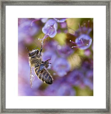 Hang On Framed Print