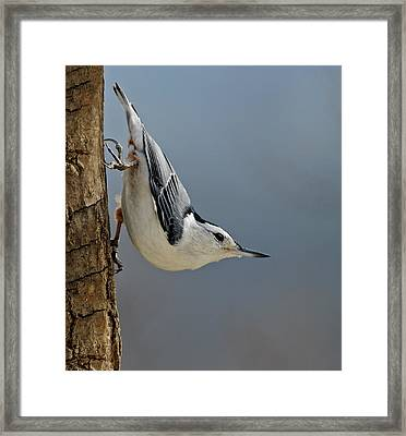 Hangin Around Framed Print