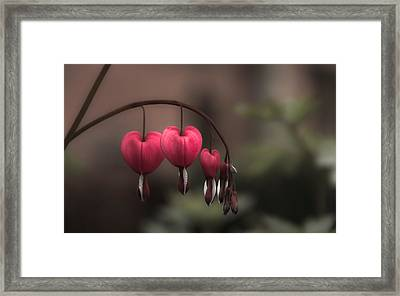Hangin' Framed Print by Chris Fletcher