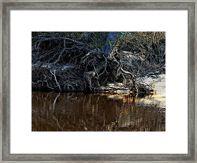 Hangin On Framed Print by Laura Ragland