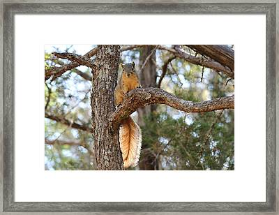 Framed Print featuring the photograph Hangin' Out by Christy Pooschke