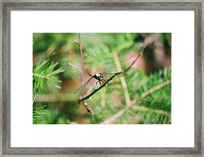 Framed Print featuring the photograph Hangin' Out by David Porteus