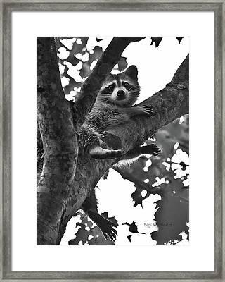 Hangin Out Framed Print