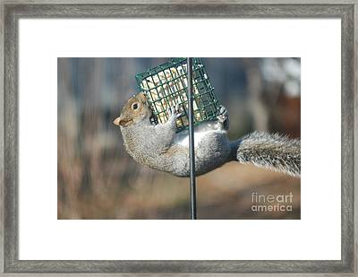 Framed Print featuring the photograph Hangin Out by Mark McReynolds
