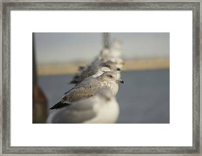Hanging Around Framed Print by Eugene Bergeron