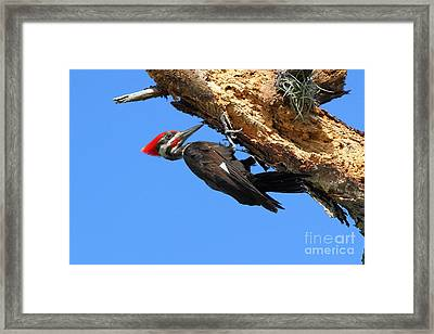 Hanging Around Framed Print by Jennifer Zelik